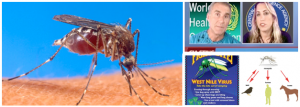 West Nile Virus Scam by Dr. Leonard Horowitz